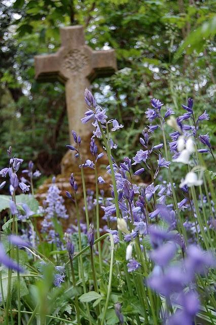 Boshyacinten op Nunhead Cemetery, London