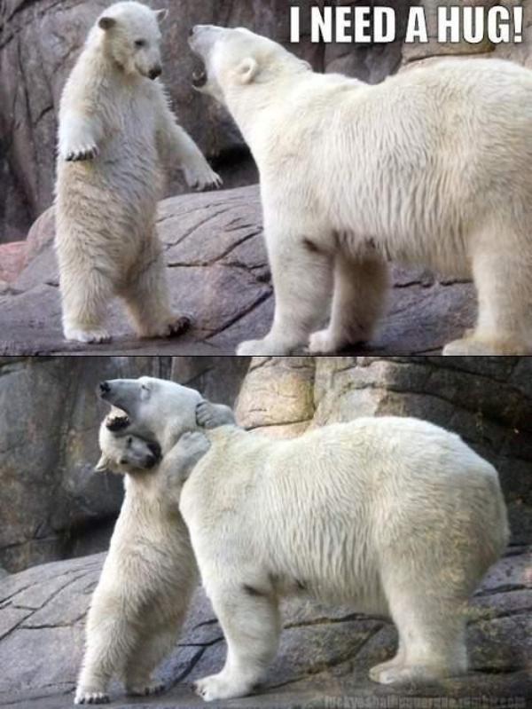 d95a63d7e06c7cd57793c8c7383393fe animal funnies funny animals 54 best polar bears images on pinterest polar bears, wild