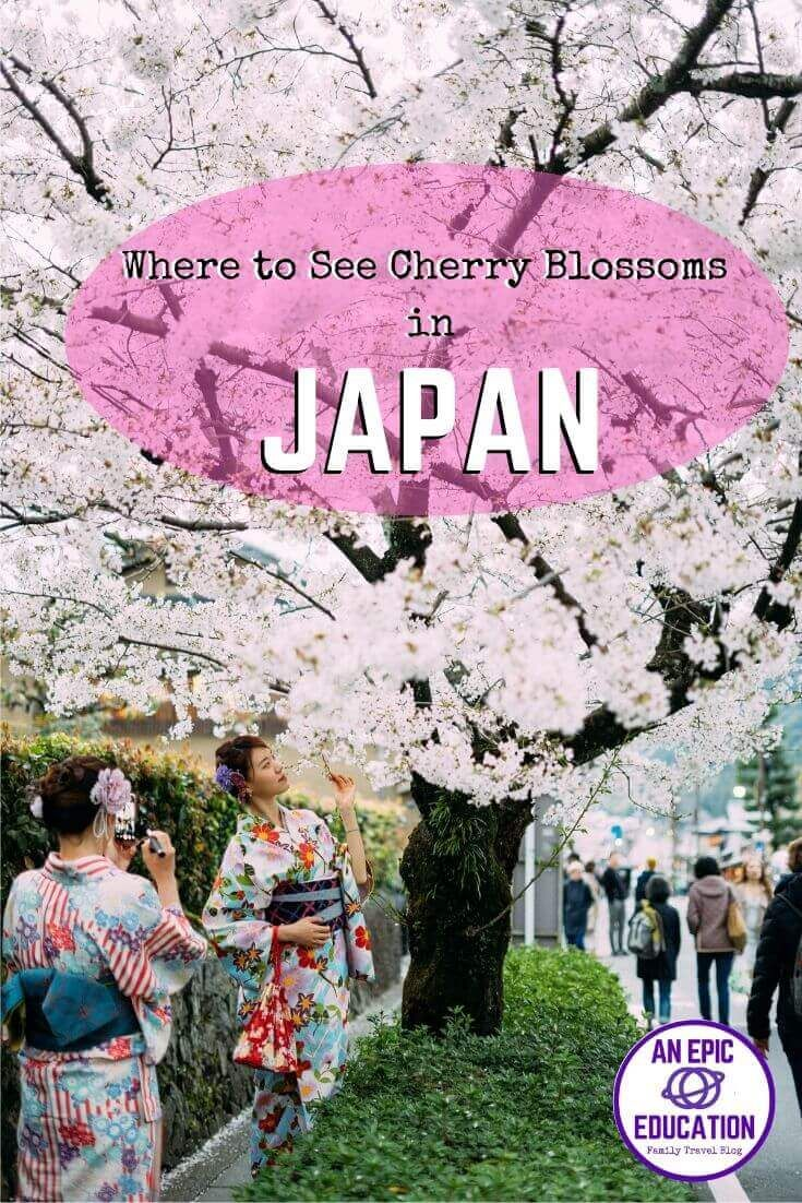 Cherry Blossoms In Japan With Kids Hanami Season Cherry Blossom Japan Family Travel Blog Japan Travel