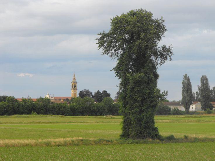 Stagno Lombardo - Provincia di Cremona - Maggio 2013