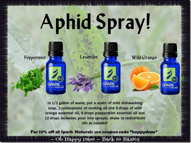 Aphid killing and deterring spray natural coupon codes for Gardening naturally coupon