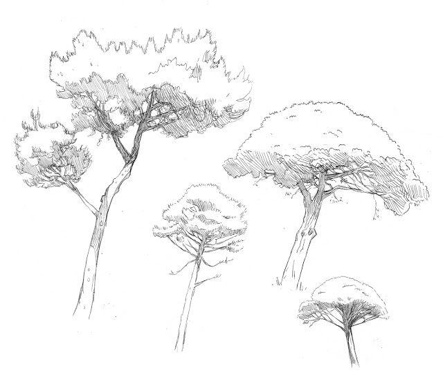 Borris bd et illustrations pins maritimes et pins parasol - Dessin parasol ...