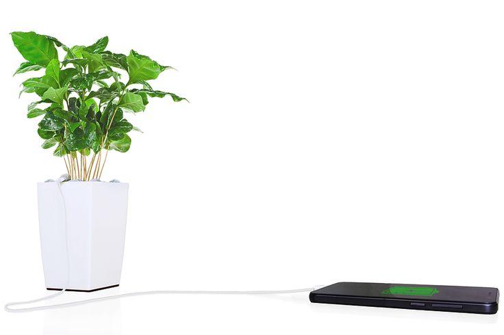 Bioo Lite: as tuas plantas podem carregar telemóveis #PortoCanal #Acordar #ViagemOnline #PauloFrias 02.05.2016