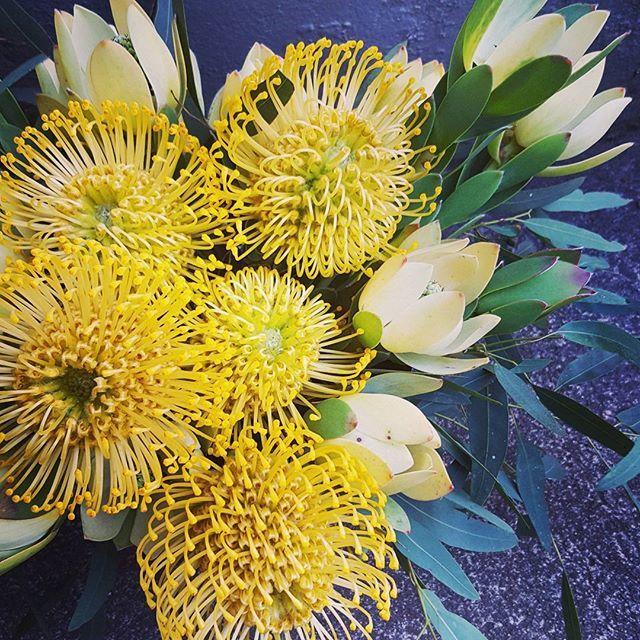 Vibrant yellow native flowers.