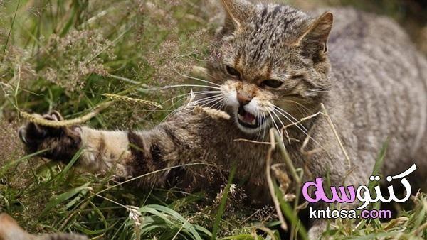 عدوانية القطط المفاجئة كيفية التعامل مع القطط الشرسة Animals Cats