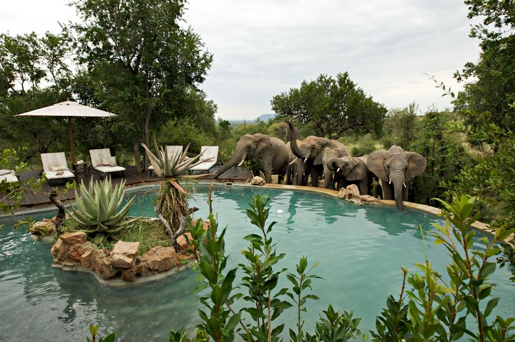 Relaxing with wildlife at Impodimo Game Lodge