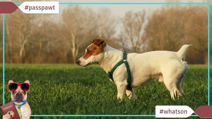 Whats On In Dogland  Walks  Great British Dog Walk at Gibside National Trust  02/14/2017  Heres a date for your diary  The Great British Dog Walk at Gibside National Trust 12 March 2017 The Great British Dog Walk is an annual event in aid of Hearing Dogs for Deaf People.  This will be a great walk for dog lovers of all ages with a free doggie bandana for every booking.  At the event there will be:  Working hearing dogs who you can meet  county/area: Tyne and Wear  Join them on the day or…