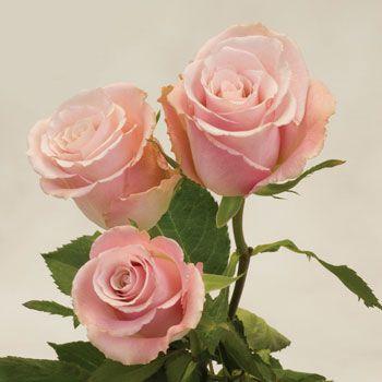1000+ images about Beautiful Unique Flowers on Pinterest ... - photo#6