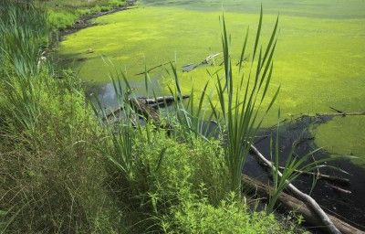 top 25 ideas about farm ponds on pinterest gardens bass