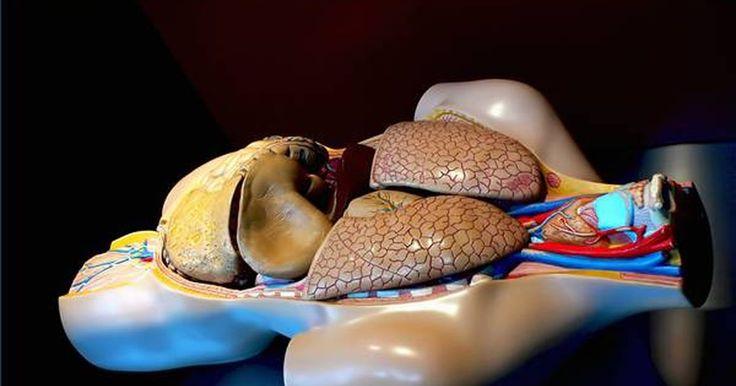 Quais são os órgãos do sistema cardiovascular?. O sistema cardiovascular humano consiste do coração (cardio) e dos vasos (vascular) sanguíneos que transportam nutrientes e oxigênio pelo corpo e removem toxinas e escórias para longe dos órgãos corporais. O cuidado apropriado e a manutenção do sistema cardiovascular é indiscutivelmente o fator mais importante para uma vida livre de doenças e para ...
