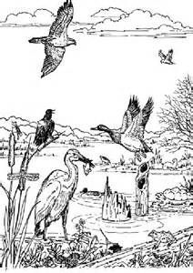 image result for estuary coloring sheet biomes animal coloring pages coloring pages color. Black Bedroom Furniture Sets. Home Design Ideas