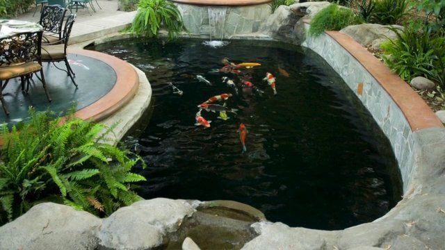 12 best images about koi pools on pinterest earth day for Pool with koi pond