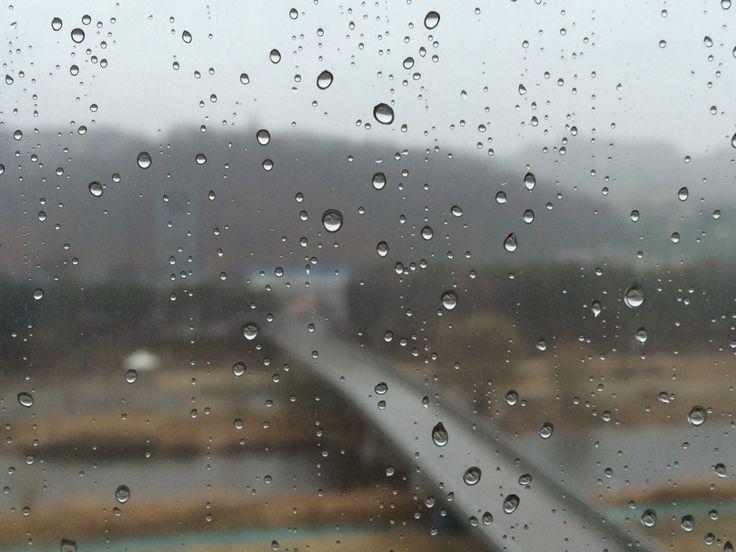 비오는 날. 봄비