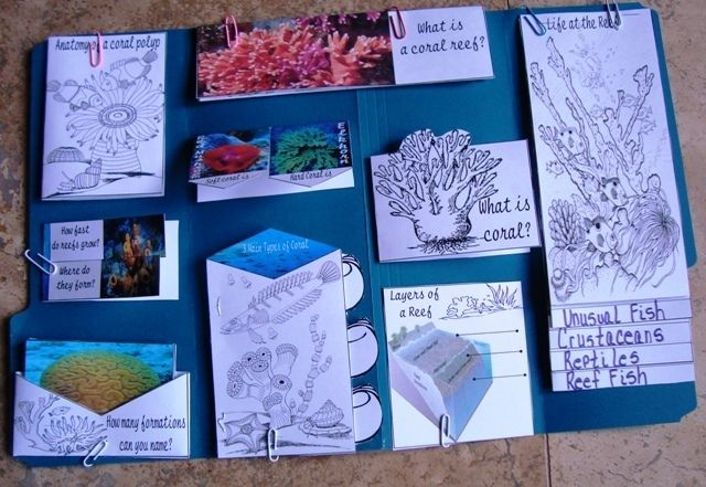 FREE Amazing lapbook and lesson notes !!!!!!!  Coral Reef