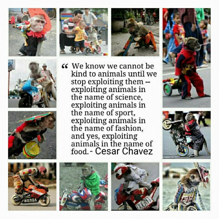 Stop Animal Exploitation