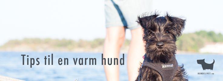 tips-sommer-varm-hund Dra på fisketur er en deilig aktivitet for hele familien, spesielt når det blir litt for varmt