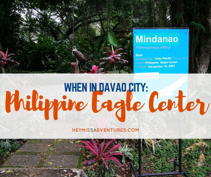 When in Davao City, you should never fail to meet the high and mighty monkey-eating eagle at the Philippine Eagle Center in Malagos.