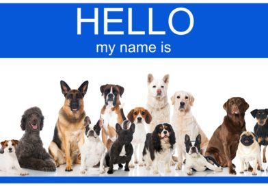 Top 100 Most Popular Female and Male Dog Names 2017