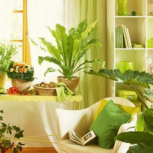 17 best Indoor Plants images on Pinterest | Indoor plants online ...