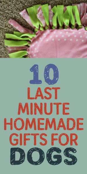 10 Last Minute Homemade Gifts For Dogs Dog Gifts Dog