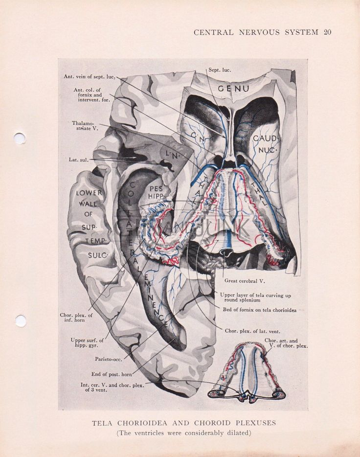 87 best Anatomy Prints images on Pinterest   Med school, Medical and ...