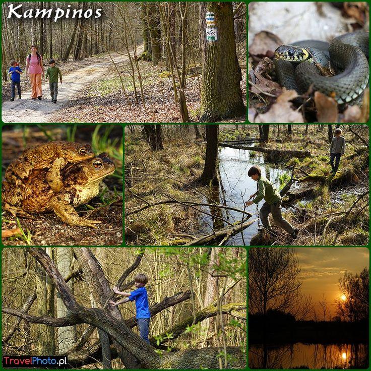 Puszcza Kampinoska - szukamy wiosny! (spring in Kampinos Forest, POLAND)