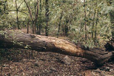 "Saatchi Art Artist Louis Vorster; Photography, ""A Forest"" #art"