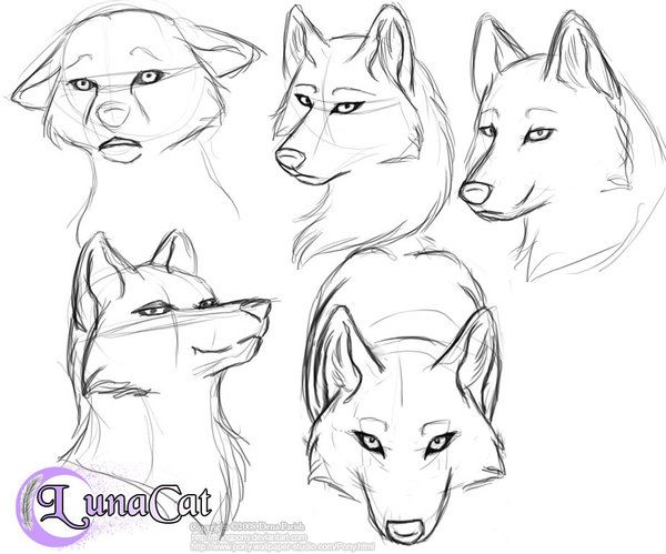 25 beautiful wolf face drawing ideas on pinterest wolf face manga drawing hair google search ccuart Choice Image
