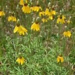 The 20 Best Xeriscape Plants for Colorado  http://www.lot-lines.com/the-20-best-xeriscape-plants-for-colorado#