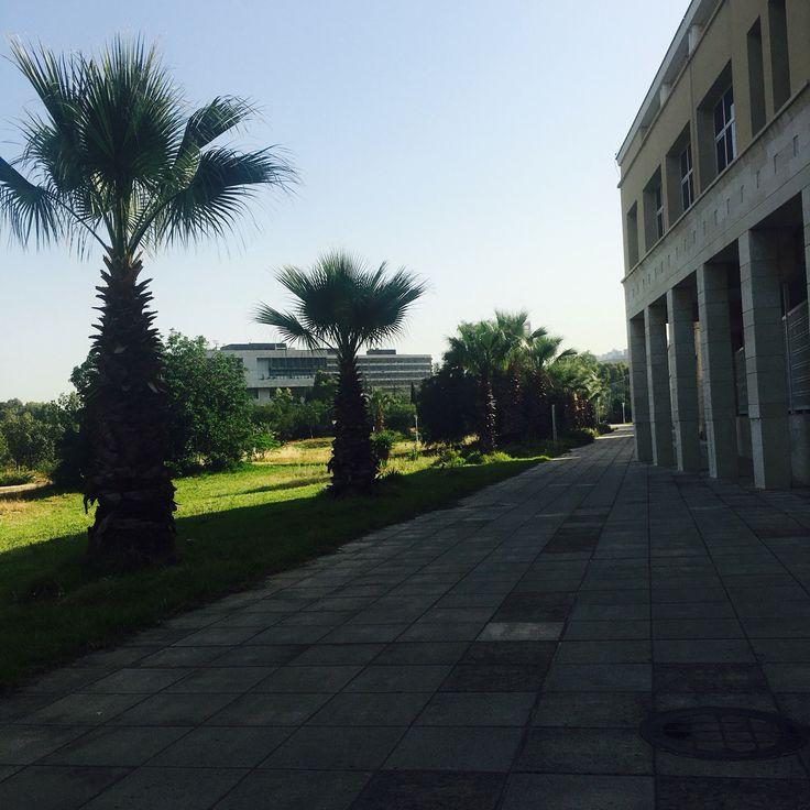 #lebaneseuniversity #Lebanese-University #LU #UL #liveloveLU #nature #trees #road #architecture #Lebanon #Lebanese #university #facultyofarts #hadat #beirut