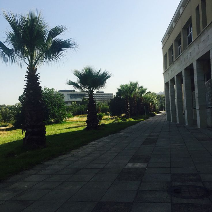 #lebaneseuniversity #Lebanese-University #LU #UL #liveloveLU #nature #trees #road #architecture #Lebanon #Lebanese #university #facultyofarts #hadat #beirut