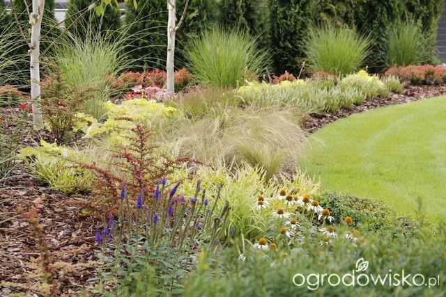 Ogród z lustrem - strona 181 - Forum ogrodnicze - Ogrodowisko