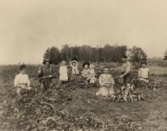 Sugar beet farming Vintage Sebewaing, Michigan