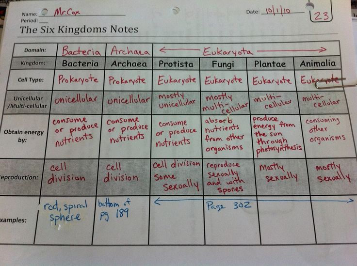 6 kingdom classification system worksheet