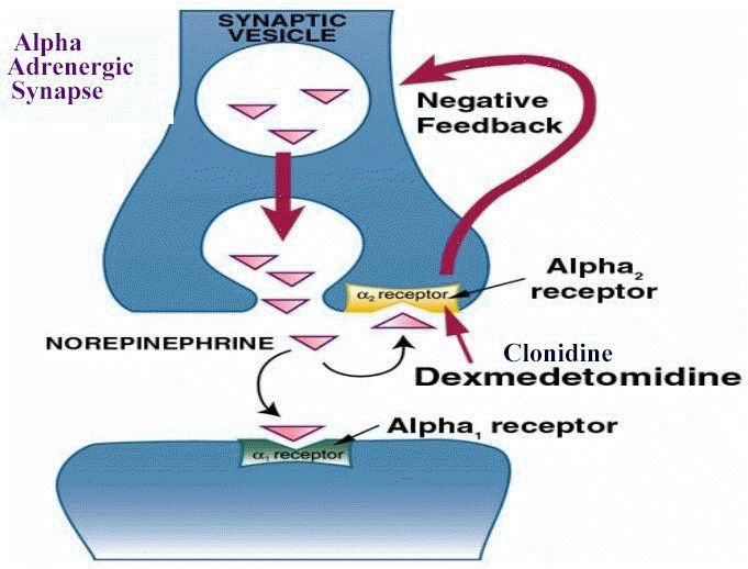 α2 receptors are located on the presynaptic terminal. eg Clonidine ligand is an α2 receptor agonist.  http://en.wikipedia.org/wiki/Alpha-2_adrenergic_receptor