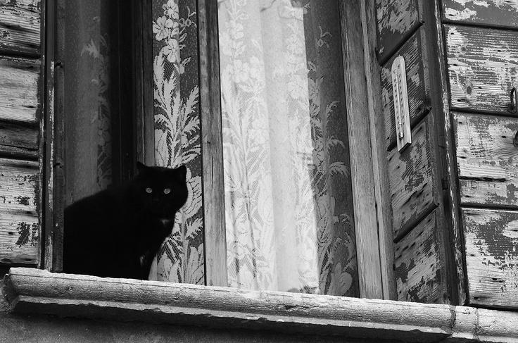 Cat in window, Venice, Italy
