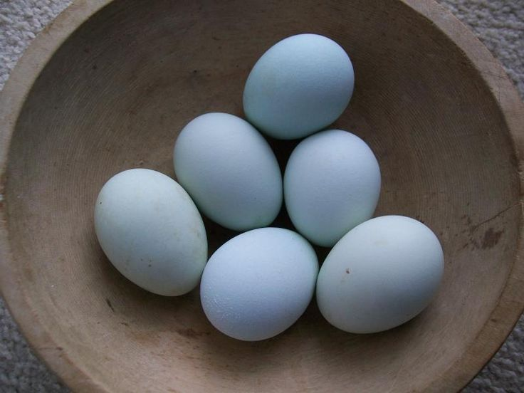 how to make hens lay more eggs