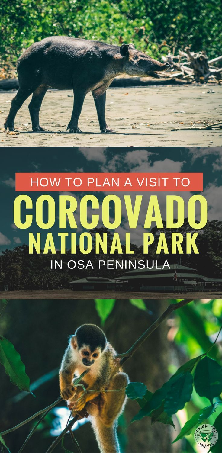 Planning a trip to Costa Rica? Here is a guide to Corcovado National Park in Osa Peninsula a must see in Costa Rica.Tips on how to visit the Corcovado National Park, what to pack, the best tours and much more