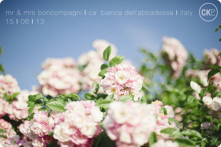 Mr & Mrs Boncompagni Destination Wedding Italy © Charlotte Knee Photography_WEB.jpg