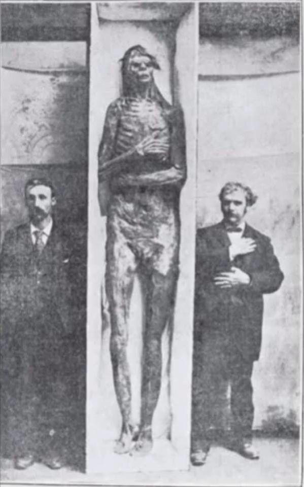 Des corps humanoïdes géants ont été découverts à plusieurs endroits dans le monde. L'un d'entre eux est visible au Museum d'Histoire Naturelle de Londres. Les scientifiques restent silencieux sur ces découvertes qui pourraient remettre en cause la théorie de l'évolution telle que nous la connaissons à l'heure actuelle. Ou pas. La seule théorie qui en parle est celle des Anciens Astronautes.