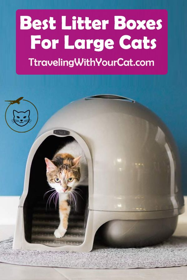 What Is The Best Litter Boxes For Large Cats According To Dr Lisa Pierson Urinating And Defecating Outside Of Travel With Your Cat Buyer S Guide Best