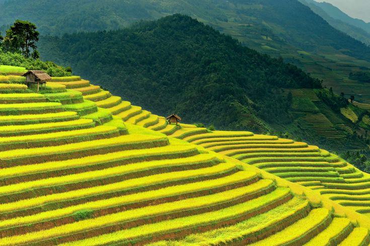 Rice paddies in Mu Cang Chai, Yen Bai, Vietnam