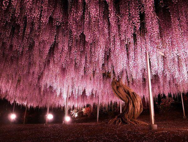 18  самых роскошных деревьев