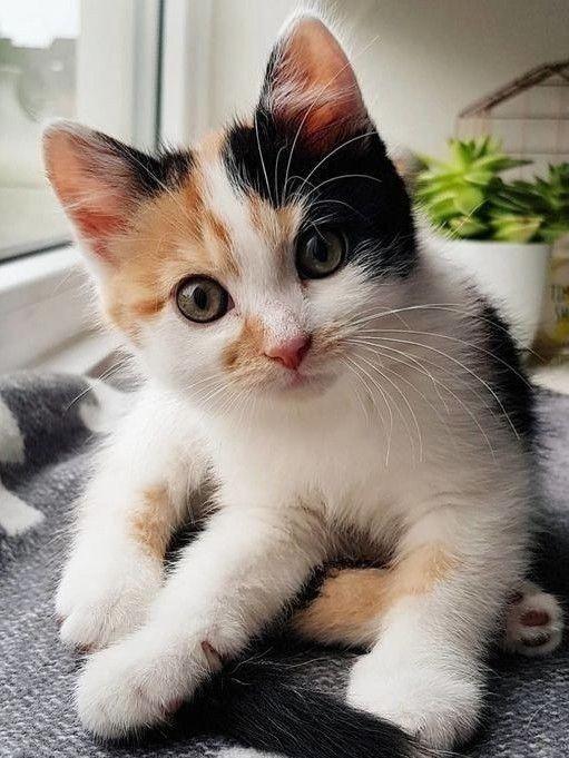 Cat Cat Cute Cat Food Katzen Katzen Diy Katzen Garten Katzen