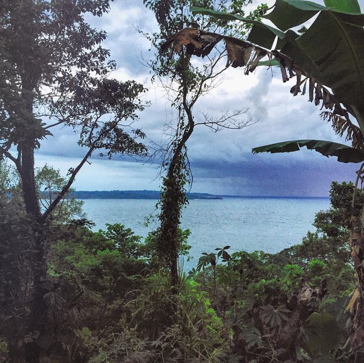 Take a #hike through the #jungle on #Bastimentos #island and #discover #breathtaking views and the #beauty of mother #nature.  Join us in #BocasDelToro #Panama and #explore the #islands with us at #BubbasHouse.