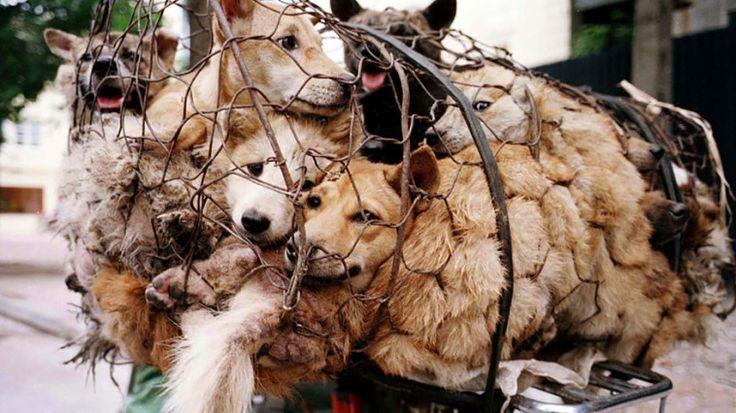Stop animal cruelty now!