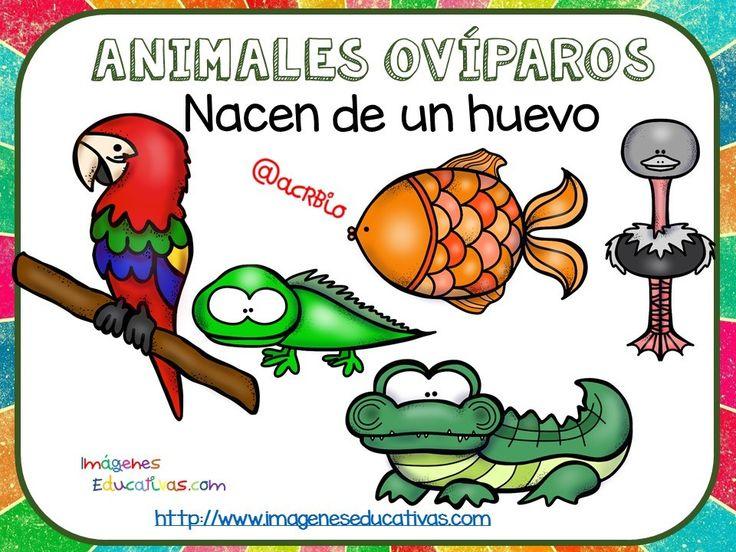 Tipos-de-animales-claseficación-9.jpg (960×720)