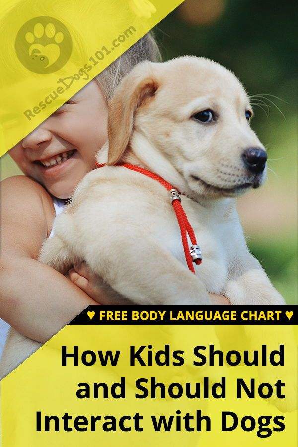 Family Dogs That Bite Kids Dogs Kids Dog Training Training