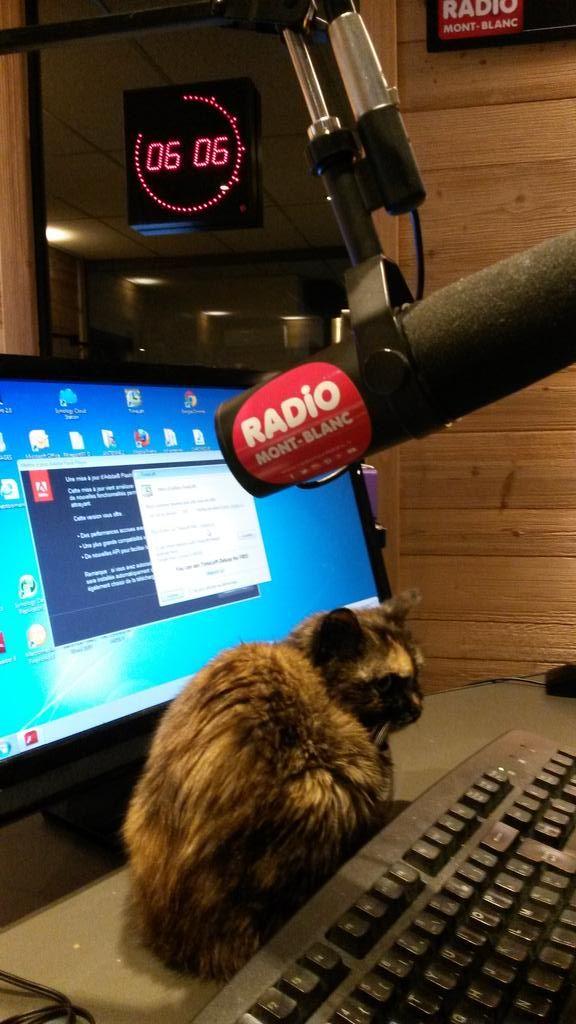 Dans le Mont Blanc Morning tout le monde est d'attaque dès 6h pour prendre l'antenne...Même Jacqueline notre nouvelle animatrice #radio sur #radiomontblanc ! #Jacqueline #radio #live #direct #30millionsdamis #chatte #cats #montblanc #montblancmorning #morning #hautesavoie #74