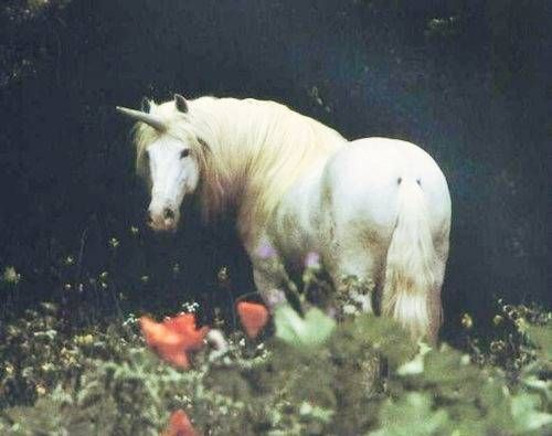17 best images about Unicorns